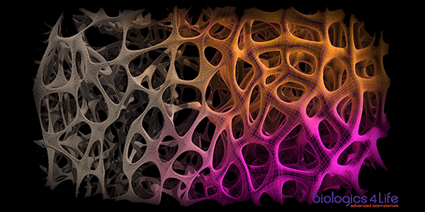 Biologics4Life Technology Provides New Clinical Option for Osteoporotic Patients